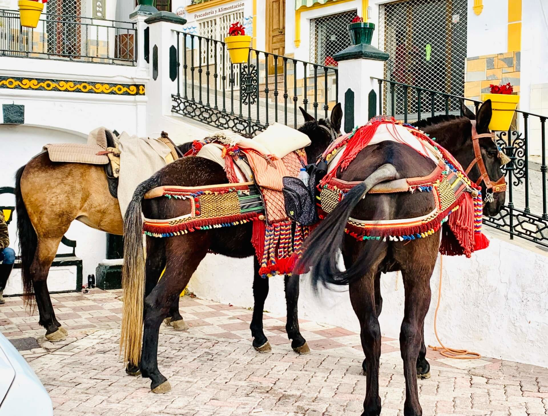 The best holiday to Spain Competa
